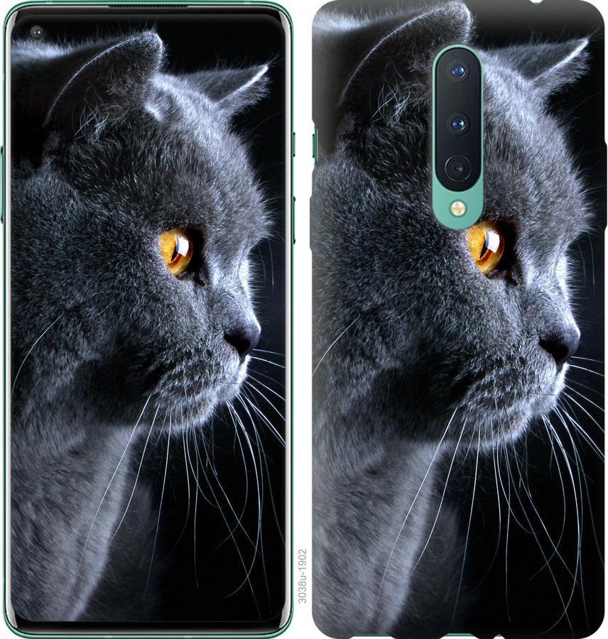Чехол на OnePlus 8 Красивый кот
