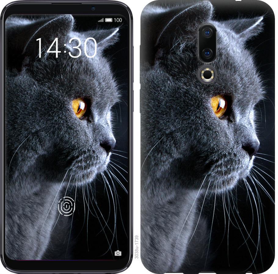 Чехол на Meizu 16 Красивый кот