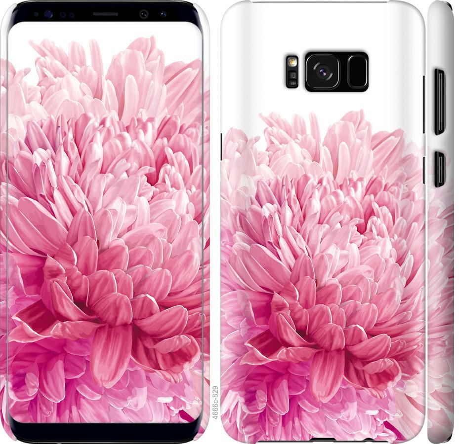 Чехол на Samsung Galaxy S8 Хризантема