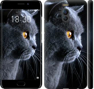 Чехол на Meizu M6 Note Красивый кот