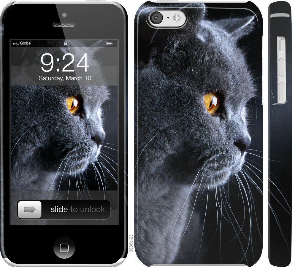 Чехол на iPhone 5c Красивый кот