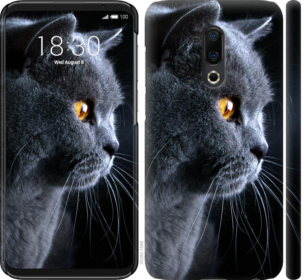 Чехол на Meizu 16 Plus Красивый кот