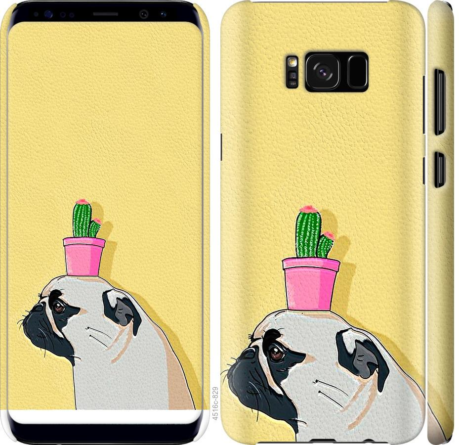Чехол на Samsung Galaxy S8 Мопс с кактусом
