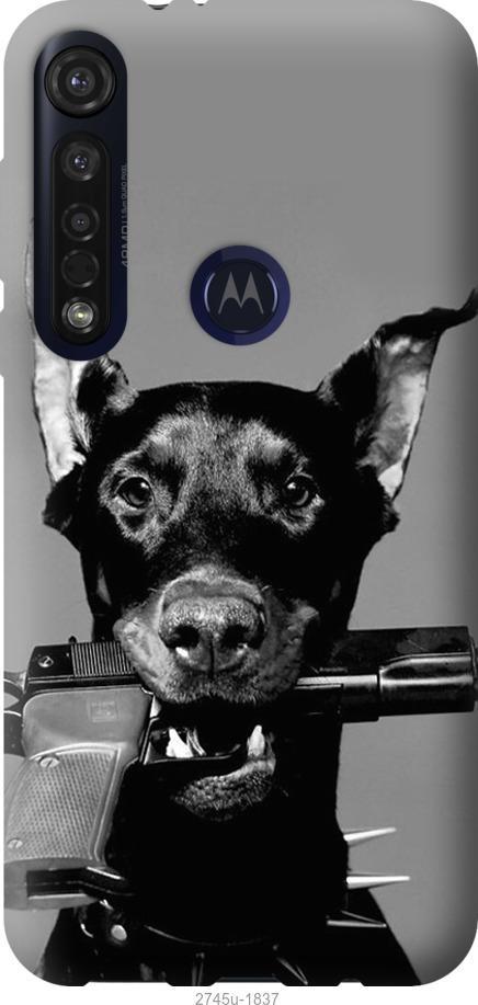 Чехол на Motorola G8 Plus Доберман