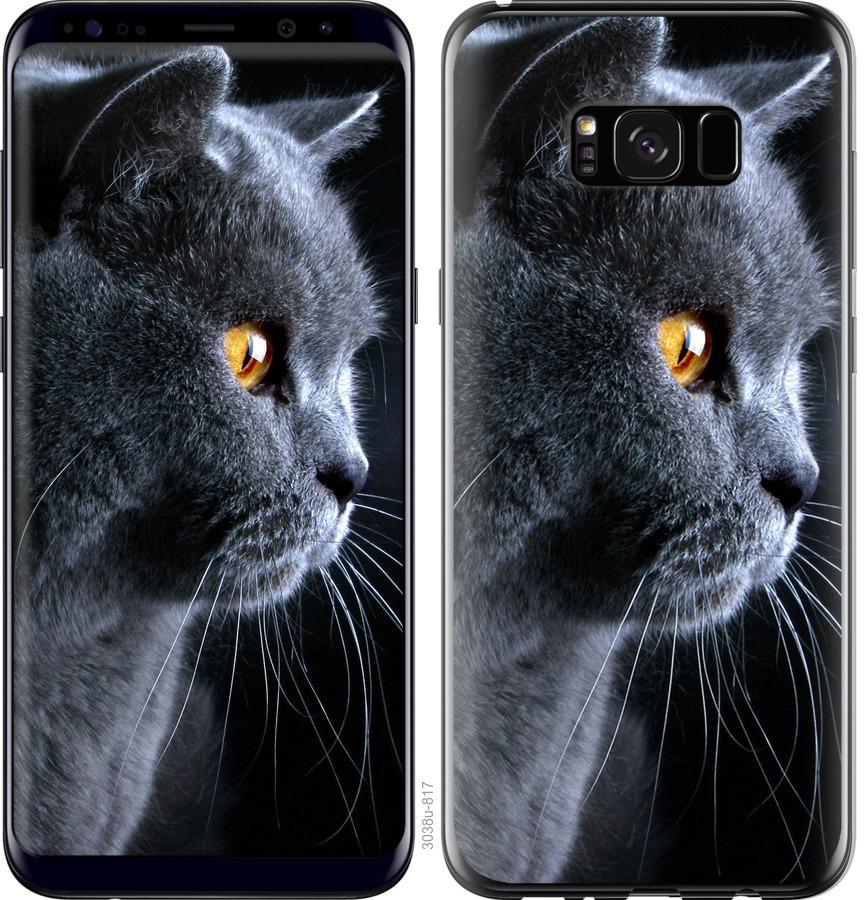 Чехол на Samsung Galaxy S8 Plus Красивый кот