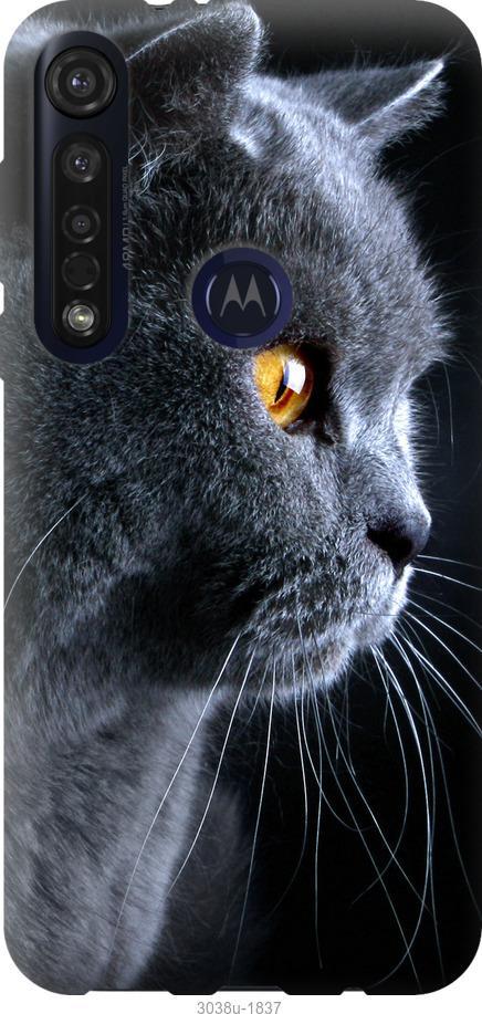 Чехол на Motorola G8 Plus Красивый кот