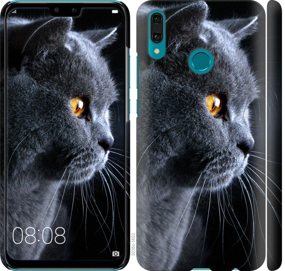 Чехол на Huawei Y9 2019 Красивый кот