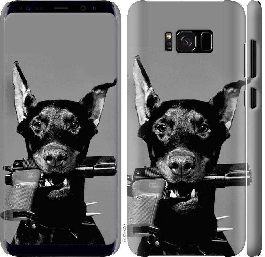 Чехол на Samsung Galaxy S8 Доберман