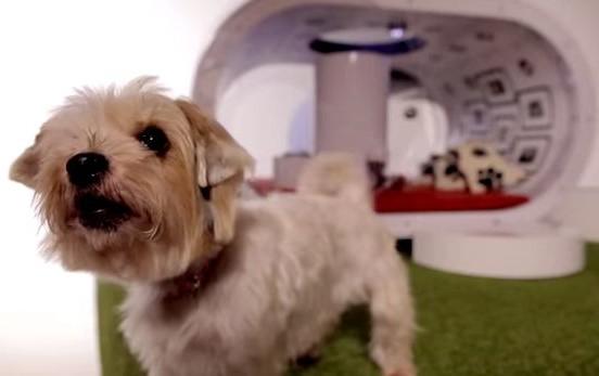 дом для собак Samsung