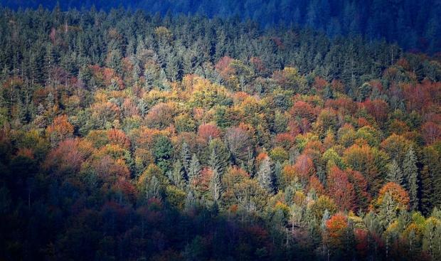 Apple защитит леса Поднебесной