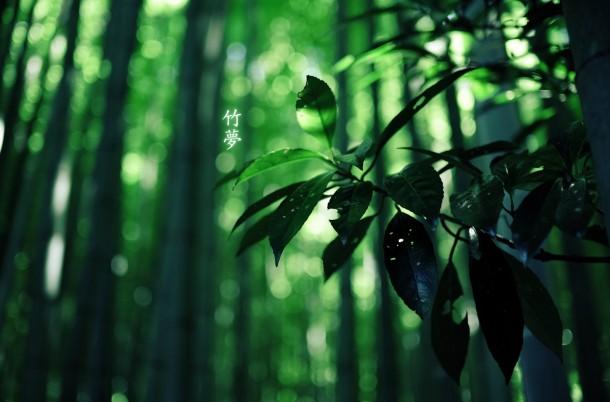 Apple займется защитой лесов в Китае