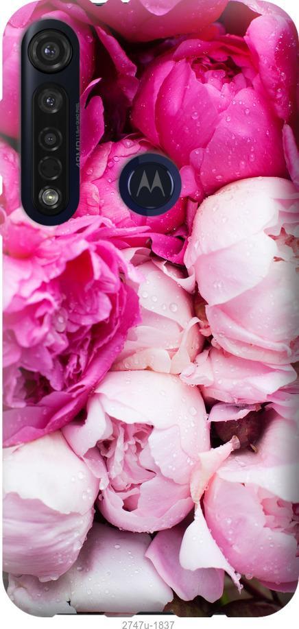 Чехол на Motorola G8 Plus Розовые пионы