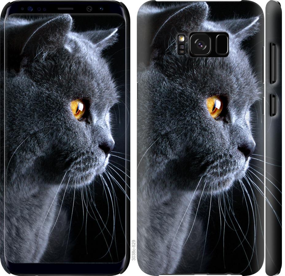 Чехол на Samsung Galaxy S8 Красивый кот